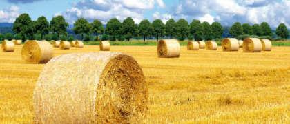 [:de]Landwirtschaftliche Buchstelle[:en]Agricultural accountancy[:]