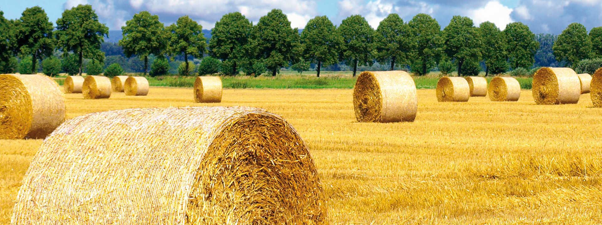 Landwirtschaft-Niederrhein-Krefeld