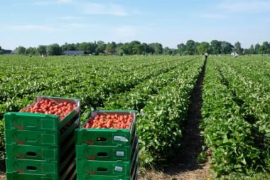 Mindestlohn Saisonarbeit Landwirtschaft