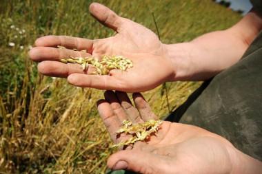 Landwirt Getreide Beruf