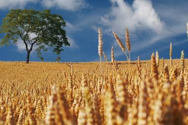 Pachtland Agrarland Feld