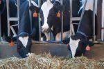 Agrarhilfen Milchbauern