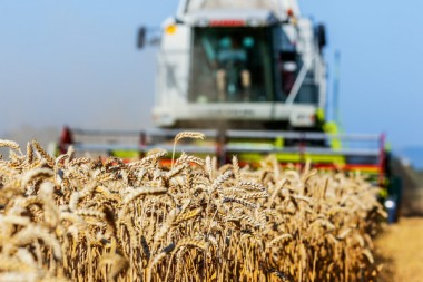 Mähdrescher Getreide Feld